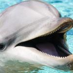 Seule la moitié du cerveau d'un dauphin dort tandis que l'autre moitié reste éveillée !